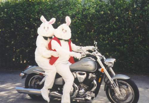 Motorcycle bunnies
